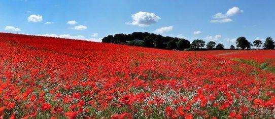 Armistice Day centenary