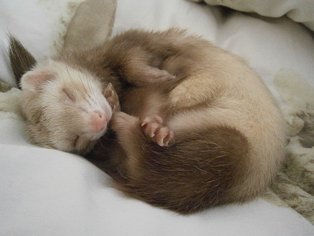 Cute animals - and a ferret riddle