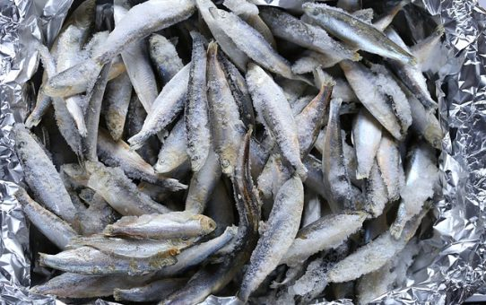 Frozen fish, a Cumbrian discovery